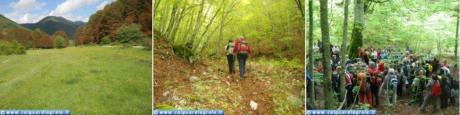 La Foresta Vetusta della Val Cervara
