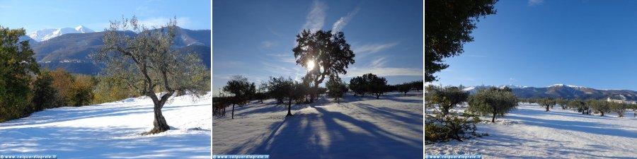 Guardiagrele - Sciesursionismo tra gli ulivi